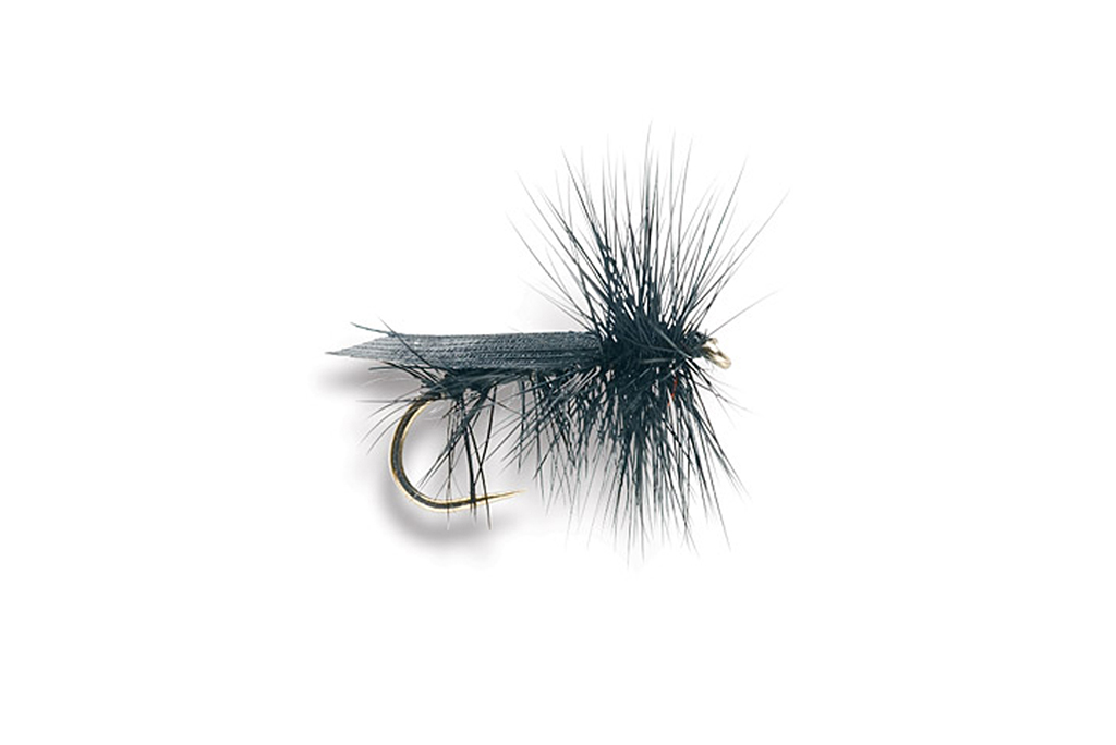 Black Caddis