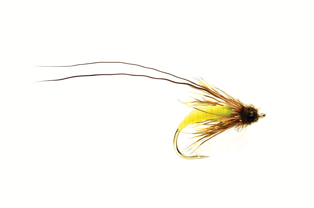 Struggling Green Caddis