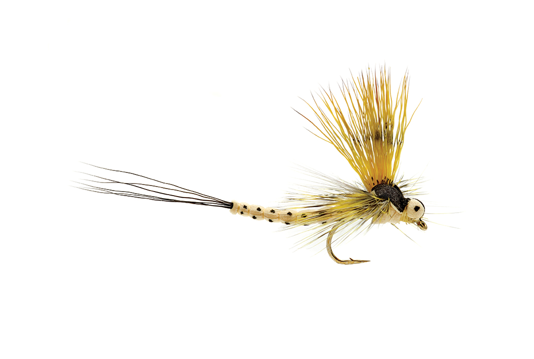 Mohican Mayfly